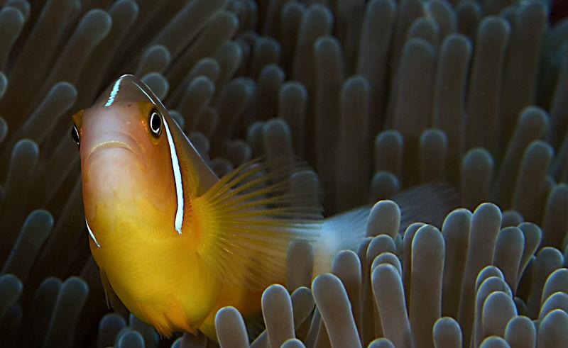 anenamefish relaxing