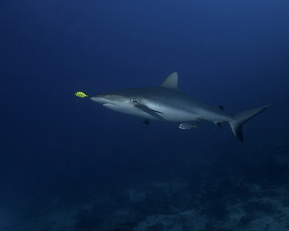 Fiji 2007