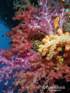 Closeup of soft coral