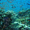 The sheer number of fishes frequently blocked our view of the reefs!