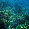Wall to wall is the only way to describe Fiji's fish and corals.