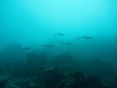 Shark babies!