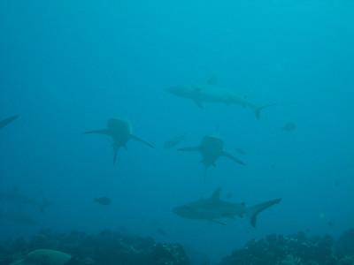 Lots o' sharks.