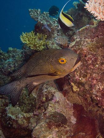 Fiji December 2009