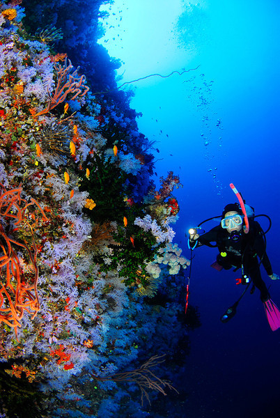 Diver on the White Wall, Fiji