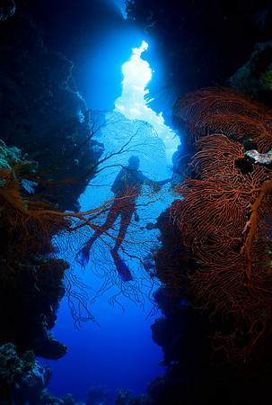 A diver is silhouetted in the opening of an undersea grotto. A large red gorgonian fan adds color to the foreground.