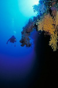 E-6 is one of the most famous dive sites in Fiji.  It is adorned with magnificent stands of colorful soft corals and sponges.