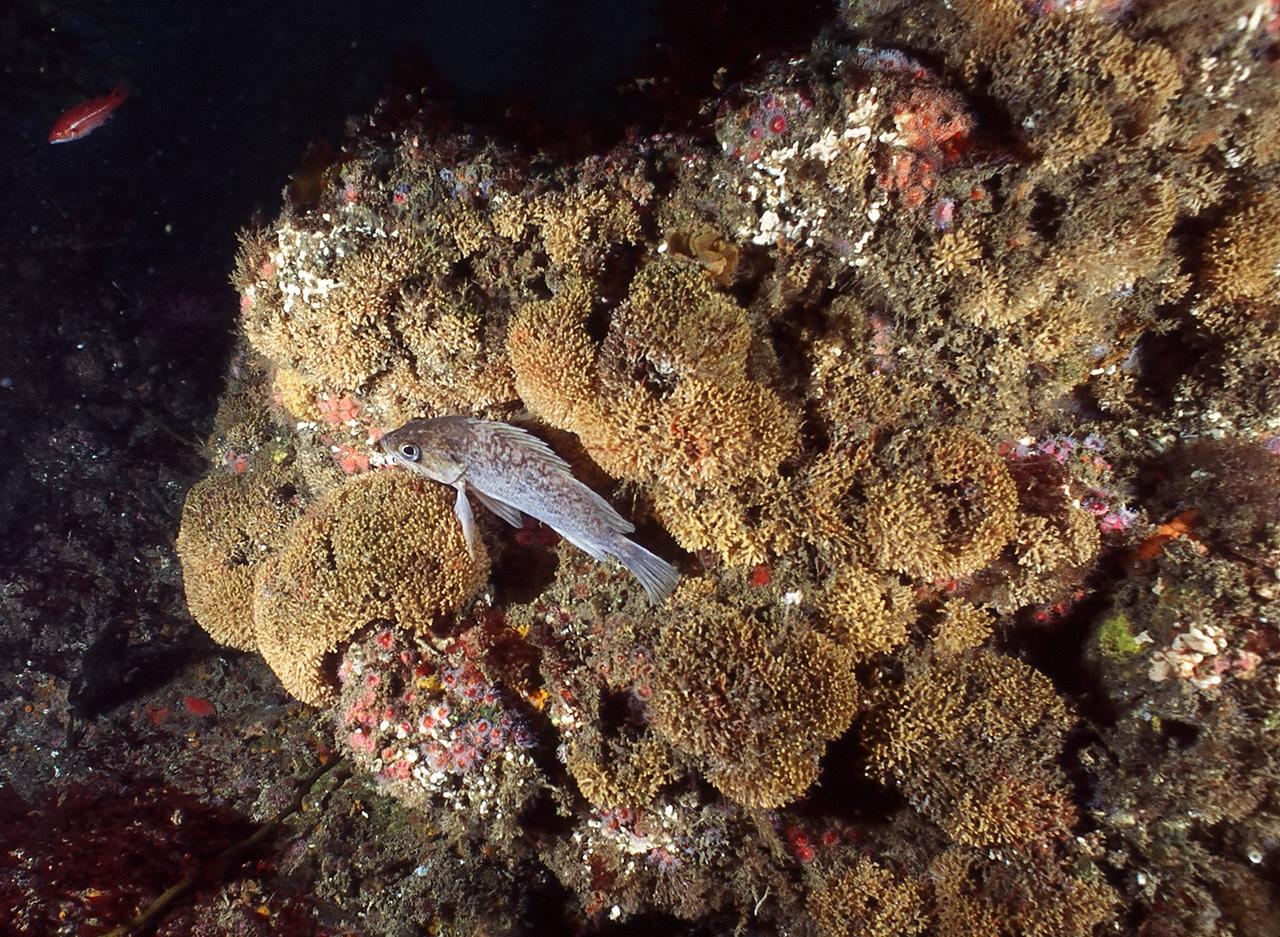 Rock Fish3