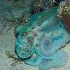 Octopus-P8020161-Edit
