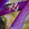 Crab-unknown_DSC5123-Edit