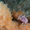 DecoratorCrab-P1050076-Edit