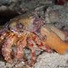 HermitCrab-anemone-P8020138-Edit