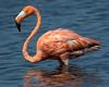 The Flamingo Glow, Bonaire