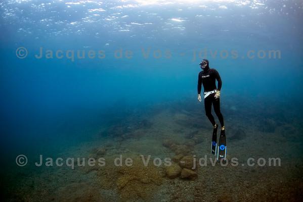 Freediver Over A Volcanic Bottom - Tenerife