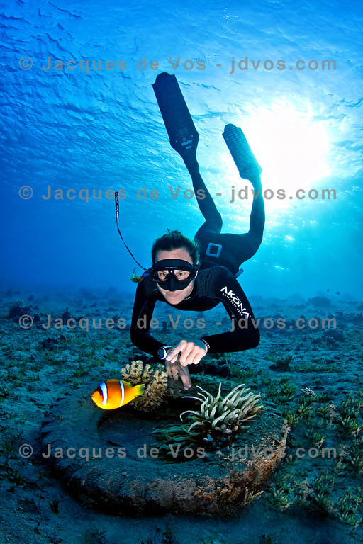 Nemo<br /> <br /> Linda Paganelli with a two band clown fish - Dahab, Egypt<br /> <br /> Ikelite 50D Housing (8'' Dome Port)<br /> Ikelite DS-160 Strobes