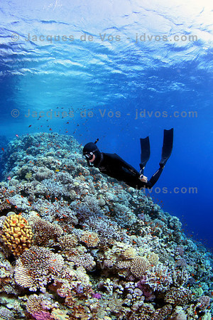 Freediving Over Colourful Coral