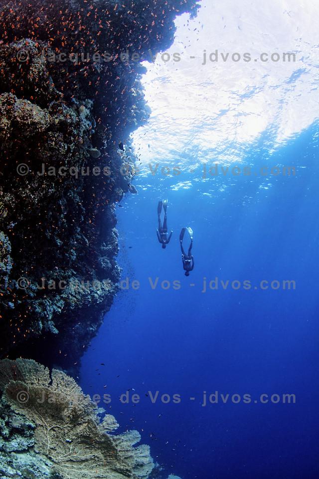 Exploring The Depths - Ras Mohammed