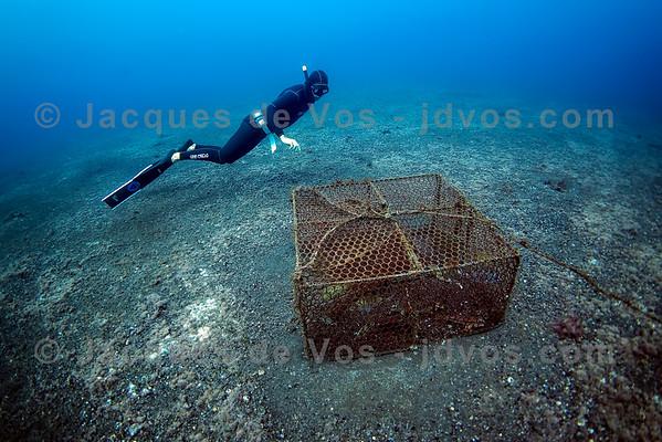 Freediver Over Fish Trap - Tenerife