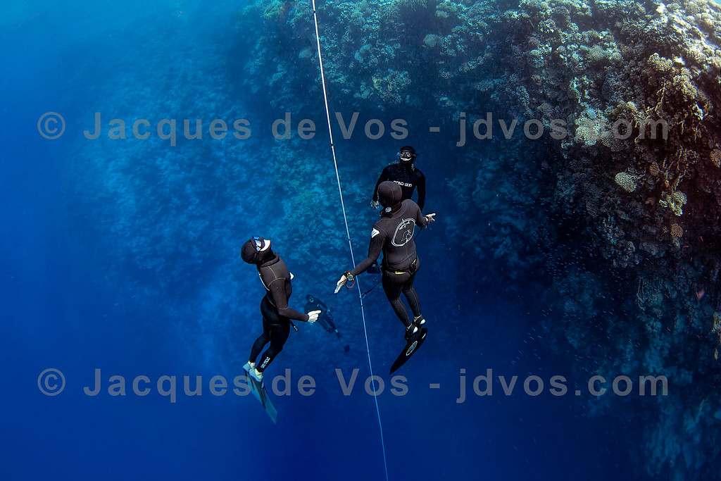 Safety Divers 2