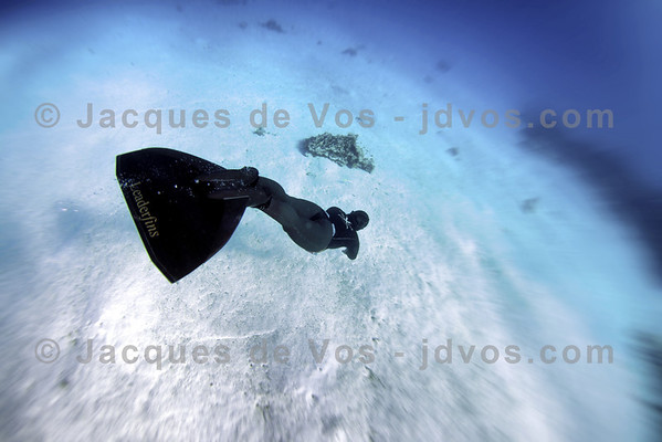 Monofin Diver