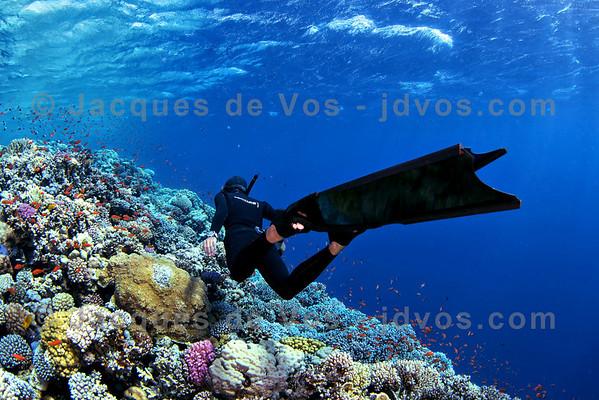 Freediver Over Coral
