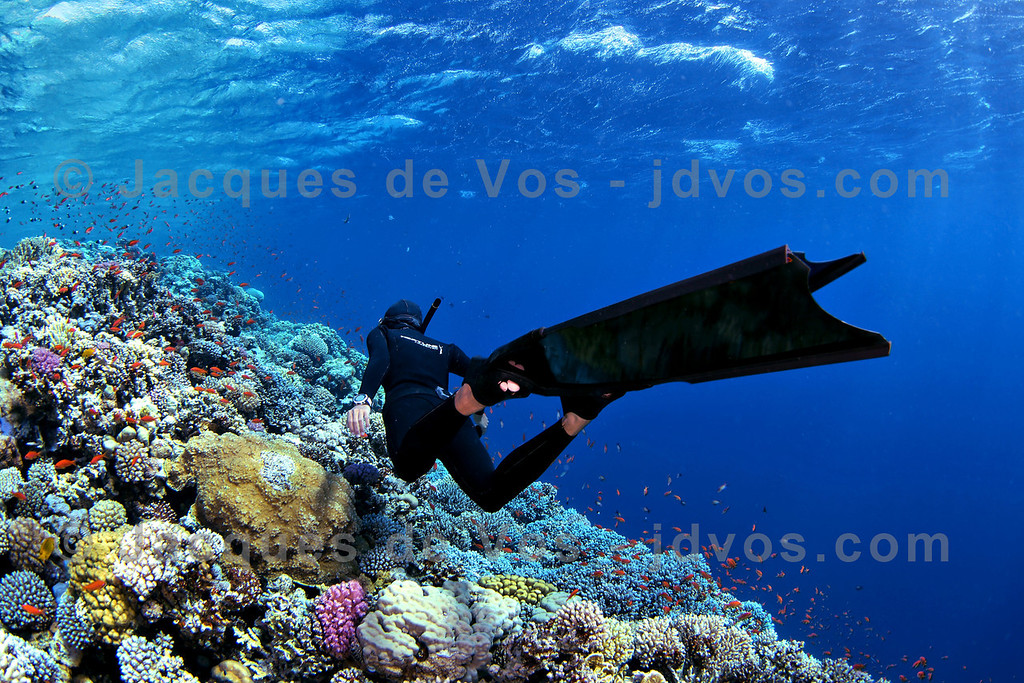 Freediver Over Coral