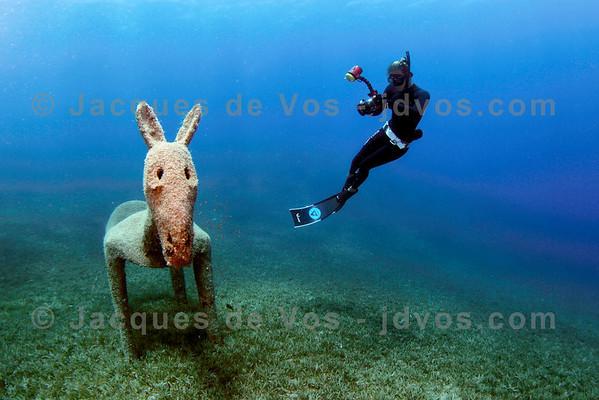 Aquatic Donkey