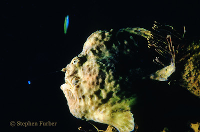 """LONGLURE FROGFISH - Waving the lure in front of the """"killing zone"""""""