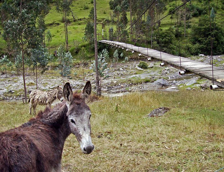 Donkey at bridge