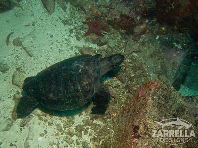 Sleeping Sea Turtle (Diving at Kicker Rock) (San Cristobal, Galapagos)