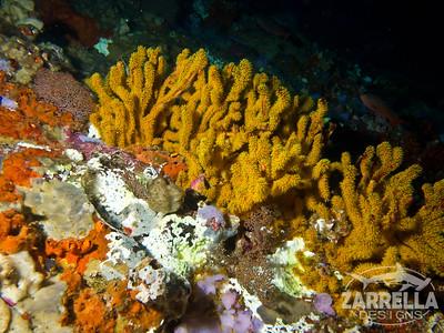 (Diving at Kicker Rock) (San Cristobal, Galapagos)