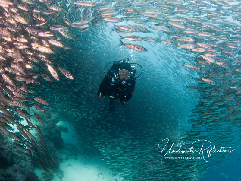 Luke swims through a tunnel in the salema school. (Galapagos)
