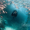 Luke swims through a tunnel in the salema school. (Galapagos)
