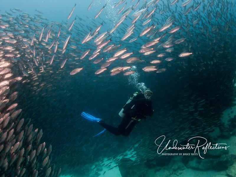 Swimming among the salema.
