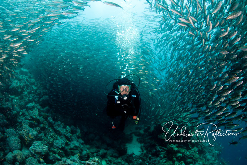 Tunnel of fish: School of salema swirl around my dive buddy, Luke.