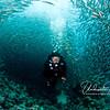 Tunnel of fish: School of salema swirl around my dive buddy, Luke.
