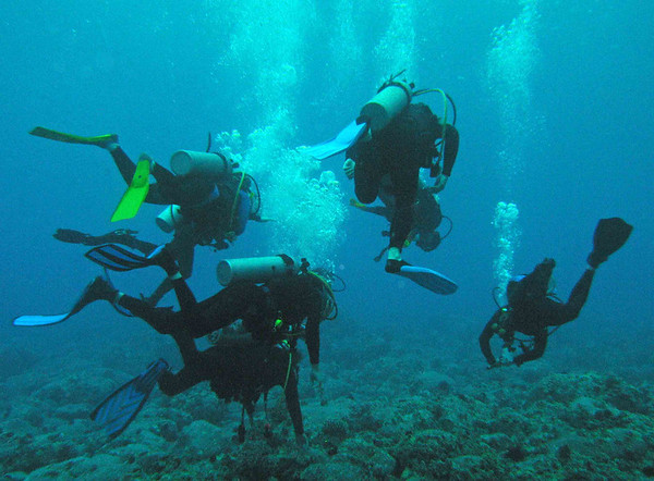 divers follow dive instructor