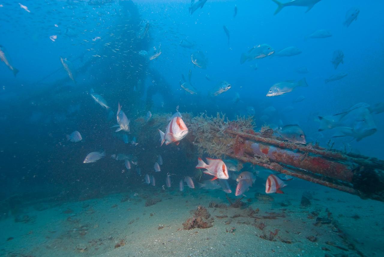 "The Trawler ""El Monti"" GBR Australia"
