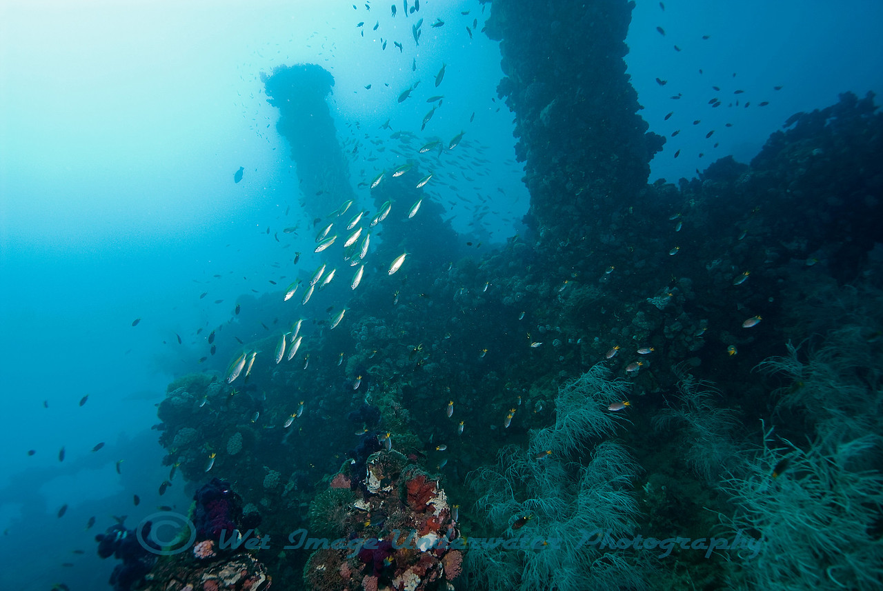 "The Wreck of the ""SS Yongala""
