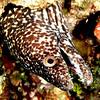 Gratutitous Eel Shot for the Trip