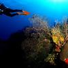 Black Coral Outcrop