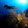 Black Coral Down Deep