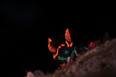 Neon Slug