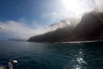 Cage diving at Guadalupe Island