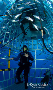 The inside view of a submersible cage