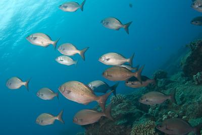 Hawaii underwater 2007