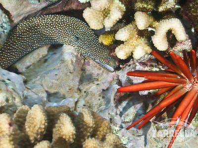 Moray Eel and Urchin
