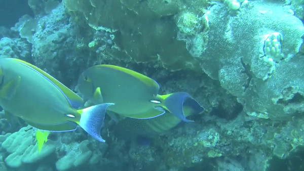 Kona diving - May 15 2012