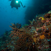 CA151360_edited-2seascape_diver