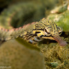 CA135575Networkpipefish copy